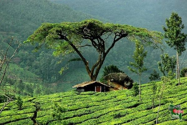 Special Teagarden Trip to Srimongal by ROAD (1 Night & 2 Days)